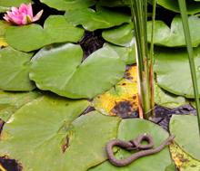 Kígyó az őstermészetben