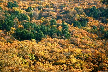 Mecseki ősz