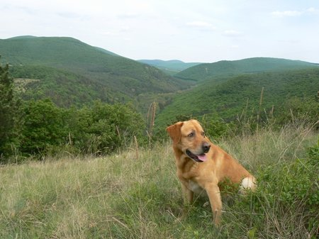 Kibetonoznák az Aranyos-völgyet (Fotó: dr. Gubek Nóra)