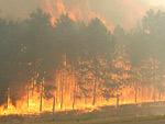 Lakóházakat fenyegetett <br />az erdőtűz Újpalotán