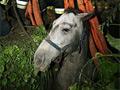 Gödörbe esett lovat mentettek