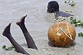 Nigériai halászfesztivál