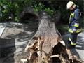 Két nőre dőlt egy fa az Erzsébet téren