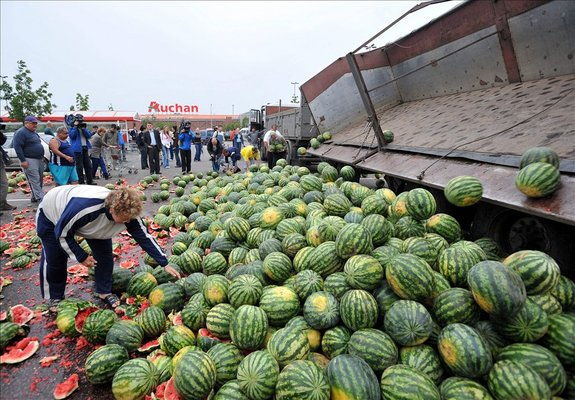 120-150 tonna dinny�t �nt�ttek a termel�k kora reggel az Auchan soroks�ri �ruh�za el�.
