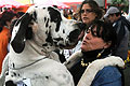 Európa Kutyakiállítás Budapesten
