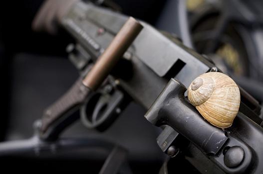 Biztonságban van a csiga a hatástalanított fegyveren