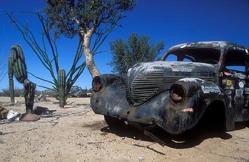 Rozsdás autó a sivatagban, kaktuszokkal. Fotó: Jim Cline