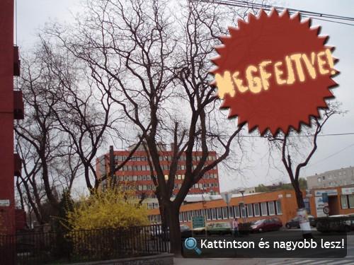 Tájkép fával és épületekkel. Fotó: Winkler Róbert