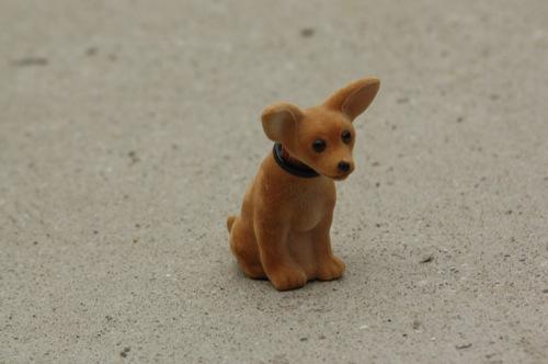 Bólogató kutya