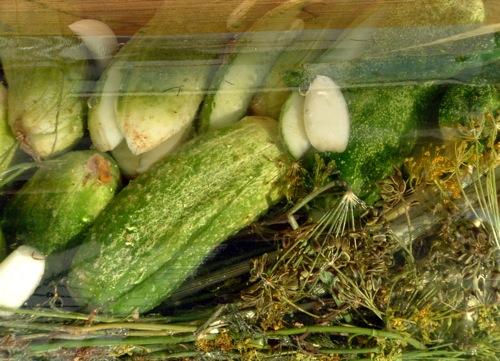Kovászos uborka közelről