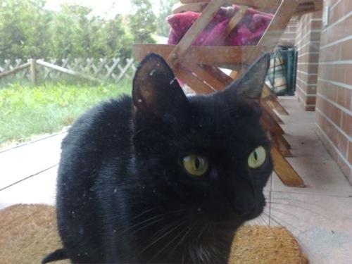 Karotta elvihető macskája