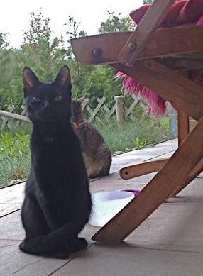 Karotta macskája