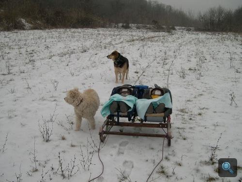 Kutyák, mellettük gyermekek az ikerszánkón