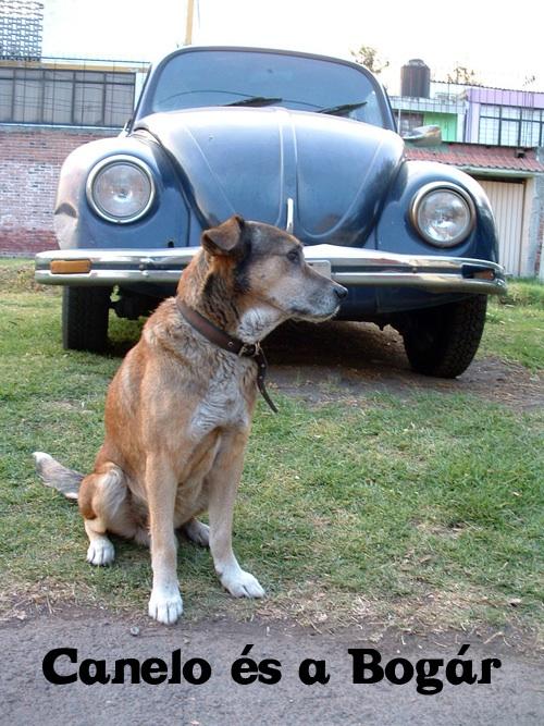 Kutya egy Volkswagen Bogár előtt