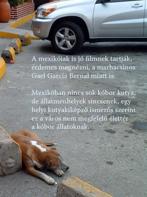 A mexikóiak is jó filmnek tartják, érdemes megnézni, a marhacsinos Gael García Bernal miatt is. Mexikóban nincs sok kóbor kutya, de állatmenhelyek sincsenek, egy helyi kutyakiképző ismerős szerint ez a város nem megfelelő élettér a kóbor állatoknak.