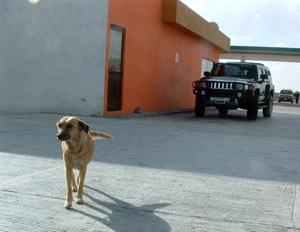 Kutya egy Hummer H2 előtt