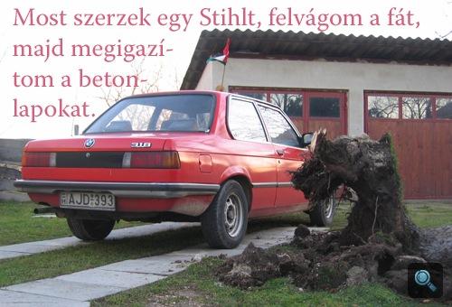 A szerző BMW-je mellé esett ezüstfenyő