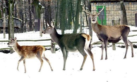 Bambi és családja