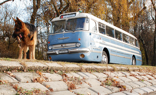 Óriási kutya, kicsi busz