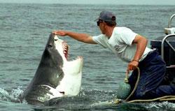 A cápa orra hegyén van egy érzékeny ideggóc
