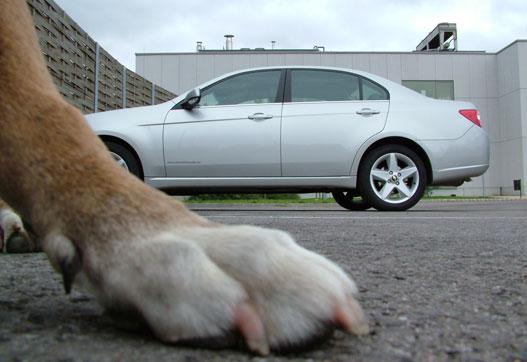 Óriás kutyalények szállták meg a Földet