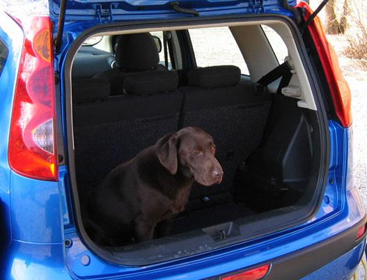 A rendezvényszervező ügynökség kutyája