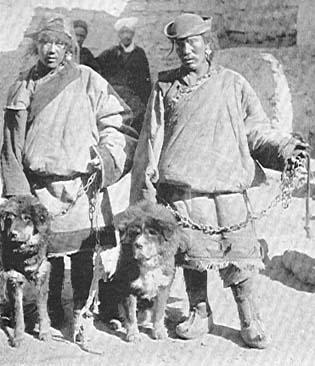 Tibeti Masztiff, az eredeti