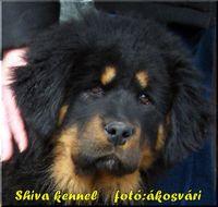 Shiva Shandi