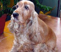 Dorka 1993-2006