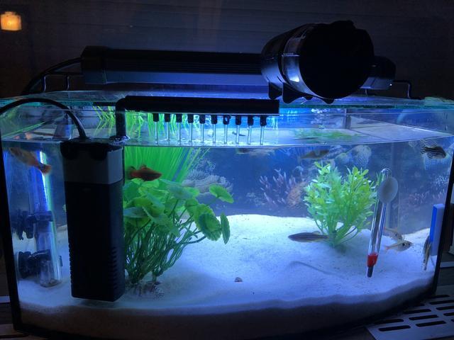 Legigénytelenebb akváriumi halak