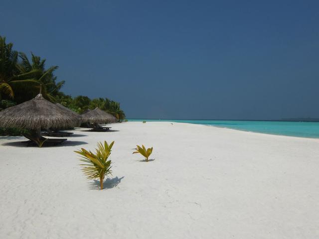 Csatlakoztassa a nyugati palm beach randevú poligám emberrel
