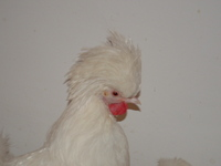 fehér kakasok és fekete punci nagy és hosszú pénisz pornó