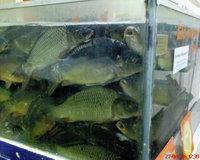 df0961be83 Csendélet(?) az Auchanban.
