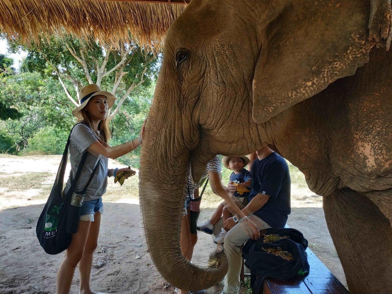 Elefánt tini szex