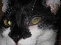 Macskánk szeme