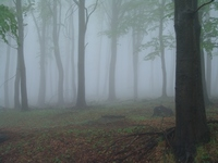 Szeretem a ködöt, na meg téged.