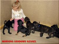 Morning Shadows kennel