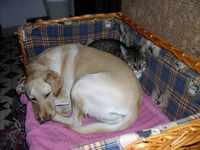kutya-macska bar�ts�g