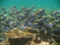 Csatlakoztassa a halbani bérleti díjakat