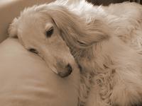 Bohus az alvóügynök