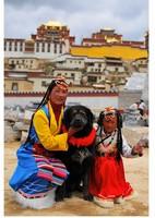Tibeti tm