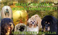 Tibeti kutyafajták