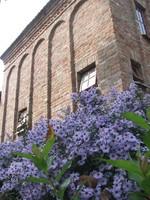 A veleméri Csinyálóház kék virágokkal