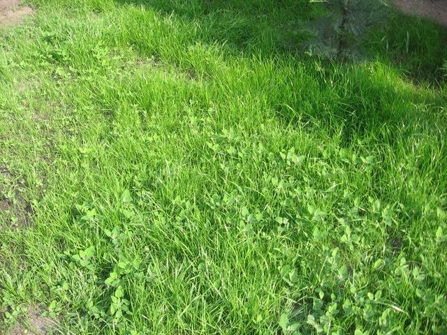 Amalgerol fűre