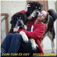 DomTom és OsYang