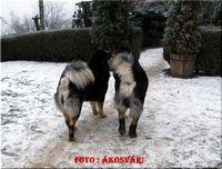 DomTom és Amog