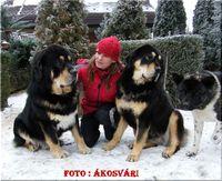 DomTom, Amog és Amina