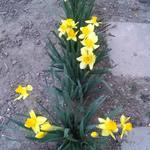 kert-növények-minden téma jöhet ) - Index Fórum 6836ede085