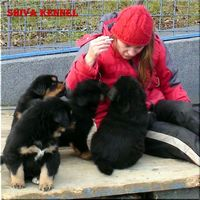 Shiva kennel G alom