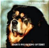 MARCO POLOS KING OF TIBET